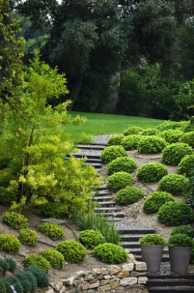 This is a picture of a landscaped hill with wood steps.